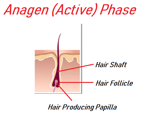 Anagen (Active Phase) upper lip hair removal